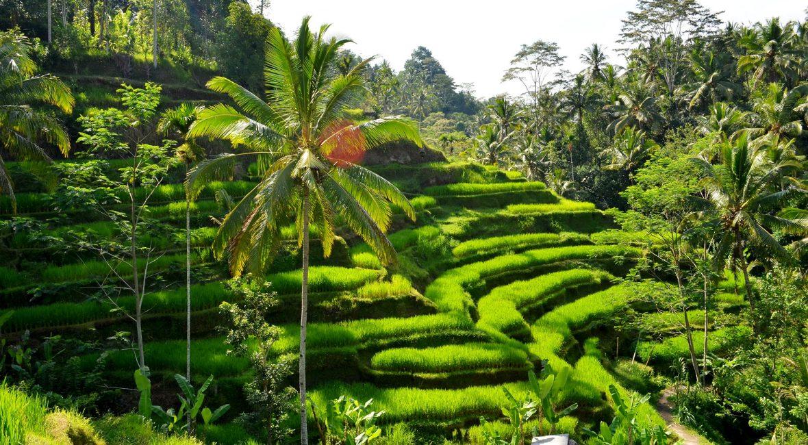 Vacances en Indonésie